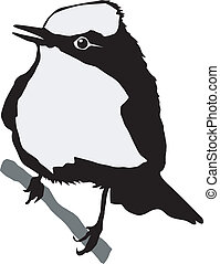 Flycatcher Stock Illustrations. 209 Flycatcher clip art ...