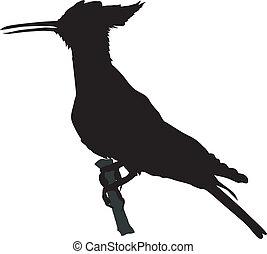 hoopoe - silhouette of hoopoe