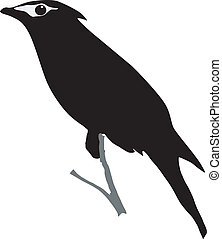 waxwing - silhouette of waxwing