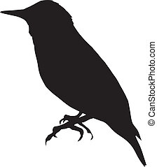 starling - silhouette of starling