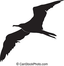frigate bird - silhouette of frigate bird