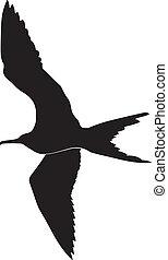 frigate bird - silhouette of frigate bird