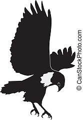 buzzard - silhouette of buzzard