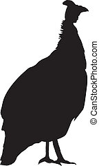 Guinea fowl - silhouette of Guinea fowl