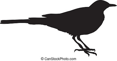 wagtail - silhouette of wagtail