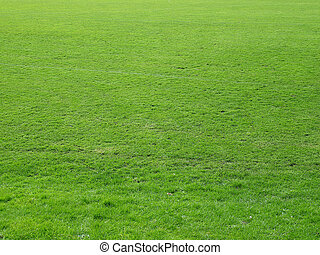 Meadow background - Green grass meadow lawn useful as...