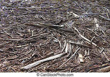 Debris from flood - Broken trees and branches causing debris...