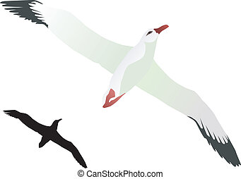 Albatross - White Albatross on a white background. vector