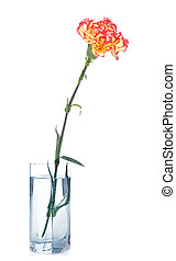 Carnation in Glass