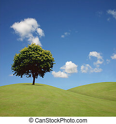 Lone Tree - A Lone Tree with Blue Sky and Grass