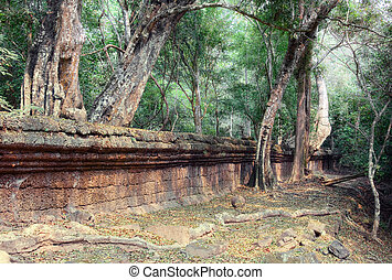 Angkor Wat - Jungle tree covering the stones of the temple...