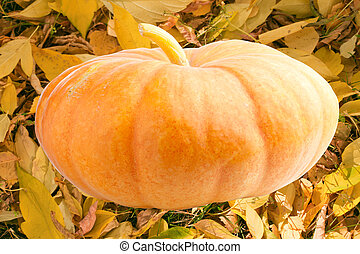 Big pumpkin on the background of autumn leaves