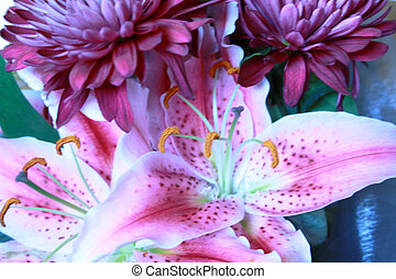 pink lillies - lovely pink lillies