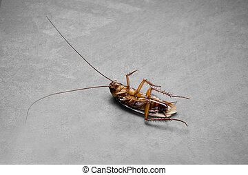 Dead Roach Color Accent