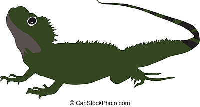 Salamander - vector illustration on white background...