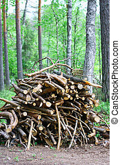 Firewood - A pile of twigs firewood in forest