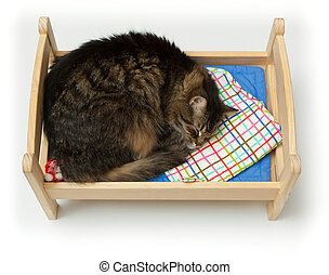 Toy cradle and a cat - Cat, curled up asleep in a children's...