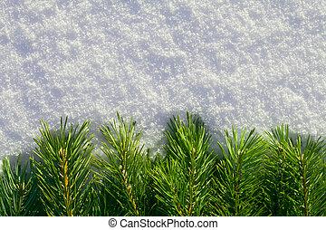 Pine needles on snow