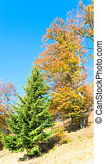 autumn colorful trees on mountainside