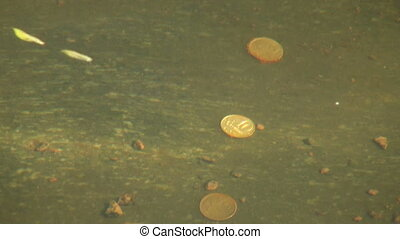 The coin under water
