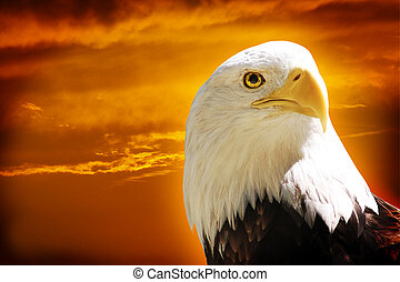 American Bald Eagle with dramatic orange sky background
