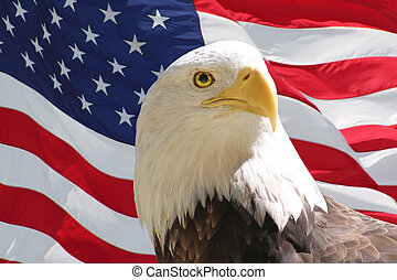 Bald Eagle and American Flag - Closeup of bald eagle with...