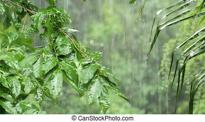 tropical rain - tropical heavy rain in asian rainforest