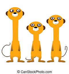 curieux, Meerkats