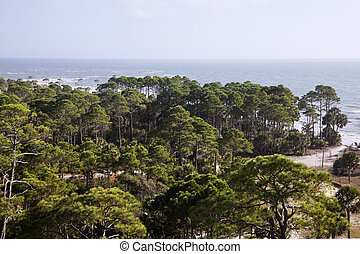 Forest by the sea - Florida, Gulf of Mexico