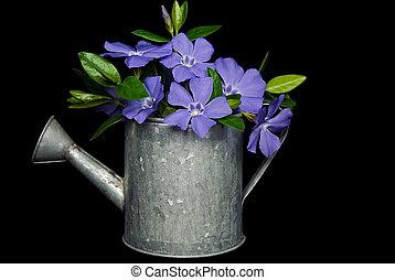 Violet Myrtle - Violet myrtle bouquet in old watering can.