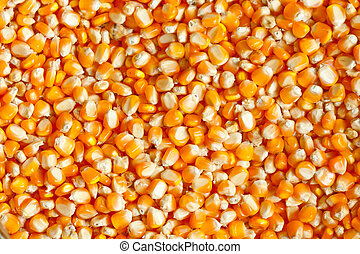 Corn kernels - Detail of corn kernels