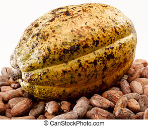 cacao bean - Cacao bean pod on white background