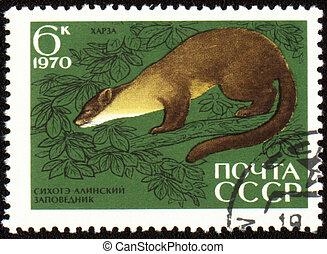 Pine marten on post stamp - USSR - CIRCA 1970: post stamp...