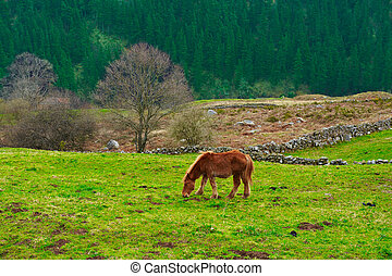 Alpine Meadows - Horse Grazing on Alpine Meadows on the...