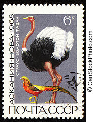 Ostrich and golden pheasant on post stamp - USSR - CIRCA...