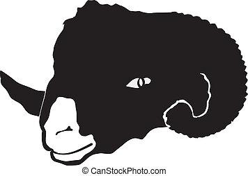 he-sheep