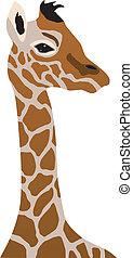 giraffe cub