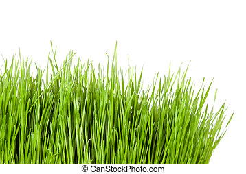 green grass in front of white background