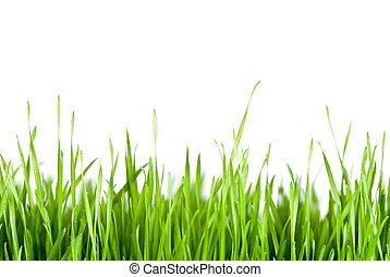 green grass copy space - green grass in front of white...