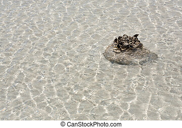 coral in shallow water - piece of coral in shallow water
