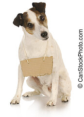 dog with a message - jack russell terrier with a blank sign...