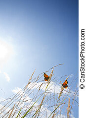 Schmetterlinge im Gegenlicht