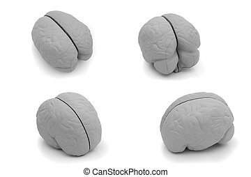 Four different view of a model brain