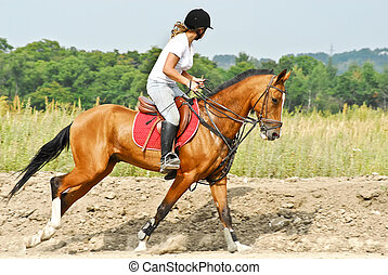 Girl is riding a Akhal-Teke horse - Girl is riding a...