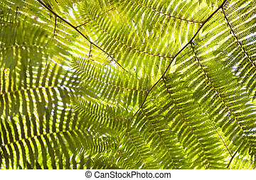 Frond - Detail of a frond