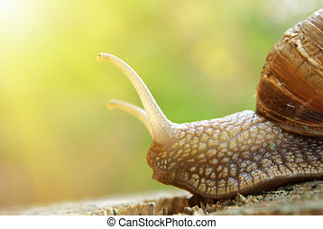 Snail and nature - Macro of snail. Nature composition.