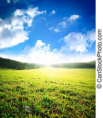 Sunrise in deep green meadow. Nature composition.