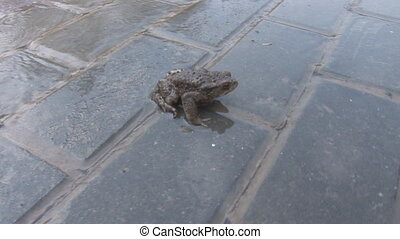 frog in watery tile