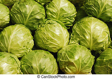 cabbage background