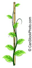 Vine Growing on a Bamboo Stick - This illustration features...